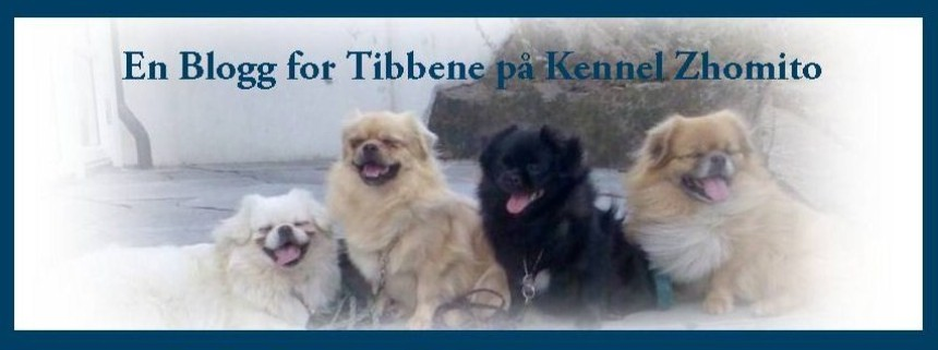 En blogg for Tibbene på Kennel Zhomito