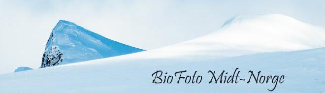 Biofoto Midt-Norge