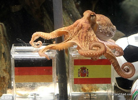 Paul the World Cup octopus dies
