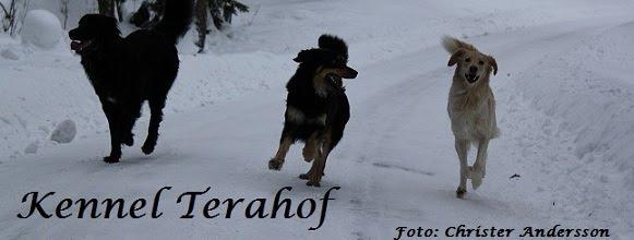Terahof