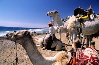#7 Sharm El Sheikh Wallpaper