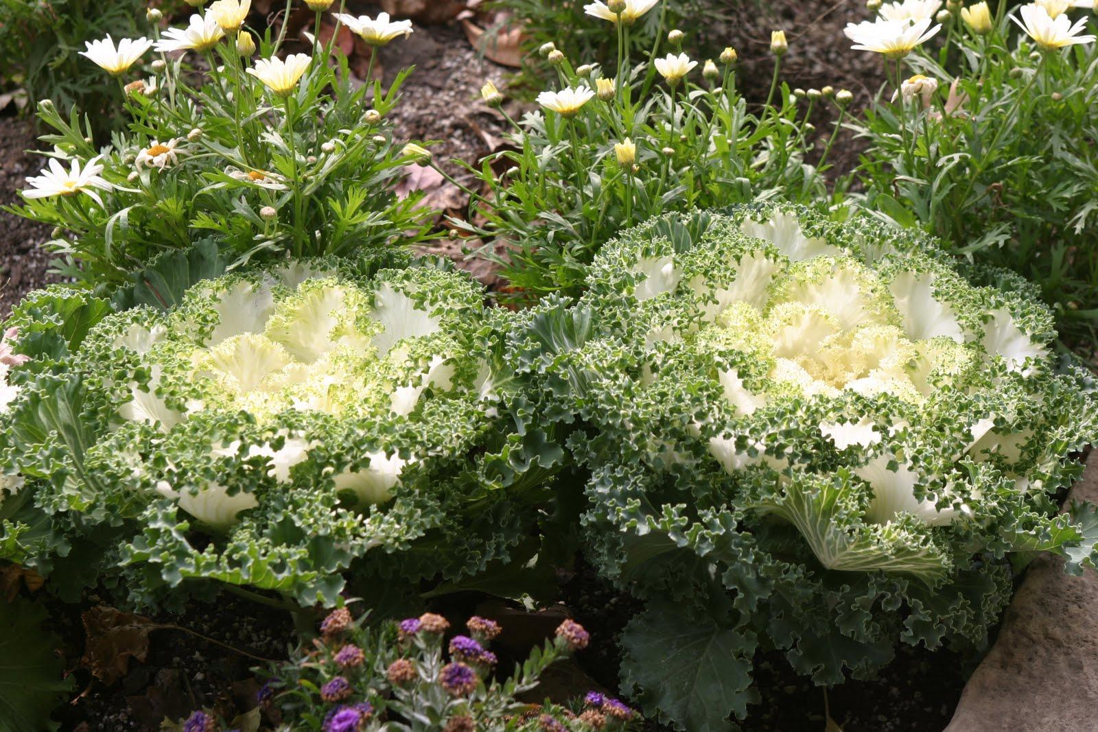Powell Gardens Blog November 2010