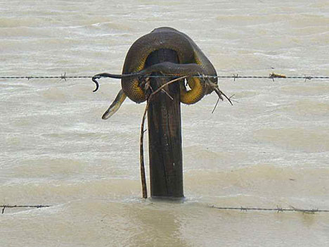 QUEENSLAND'S FLOODS