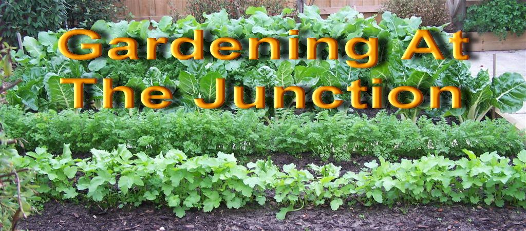 Gardening At The Junction