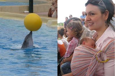 Παράσταση με δελφίνια και θαλάσσια λιοντάρια στο Αττικό Πάρκο