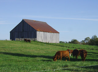 Clagett Farm cows and barn