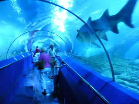Aquarium di Australia Barat (AQWA)