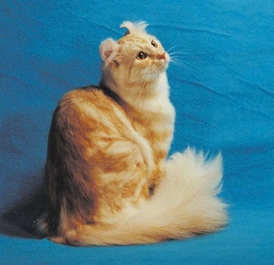 phylum kucing