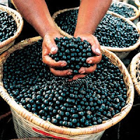 Acai berries, Image from Wikipedia