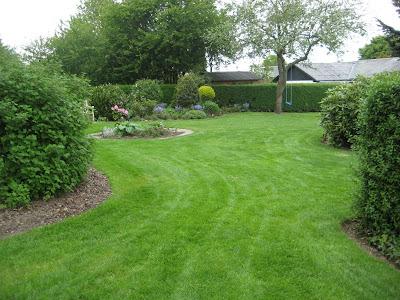 Gødning af græsplæne med mos