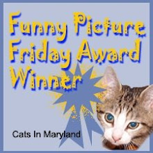 Chilli won Funny Picture Friday - isn't that cool?!