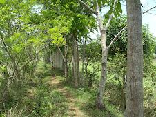 Macatbong Woods