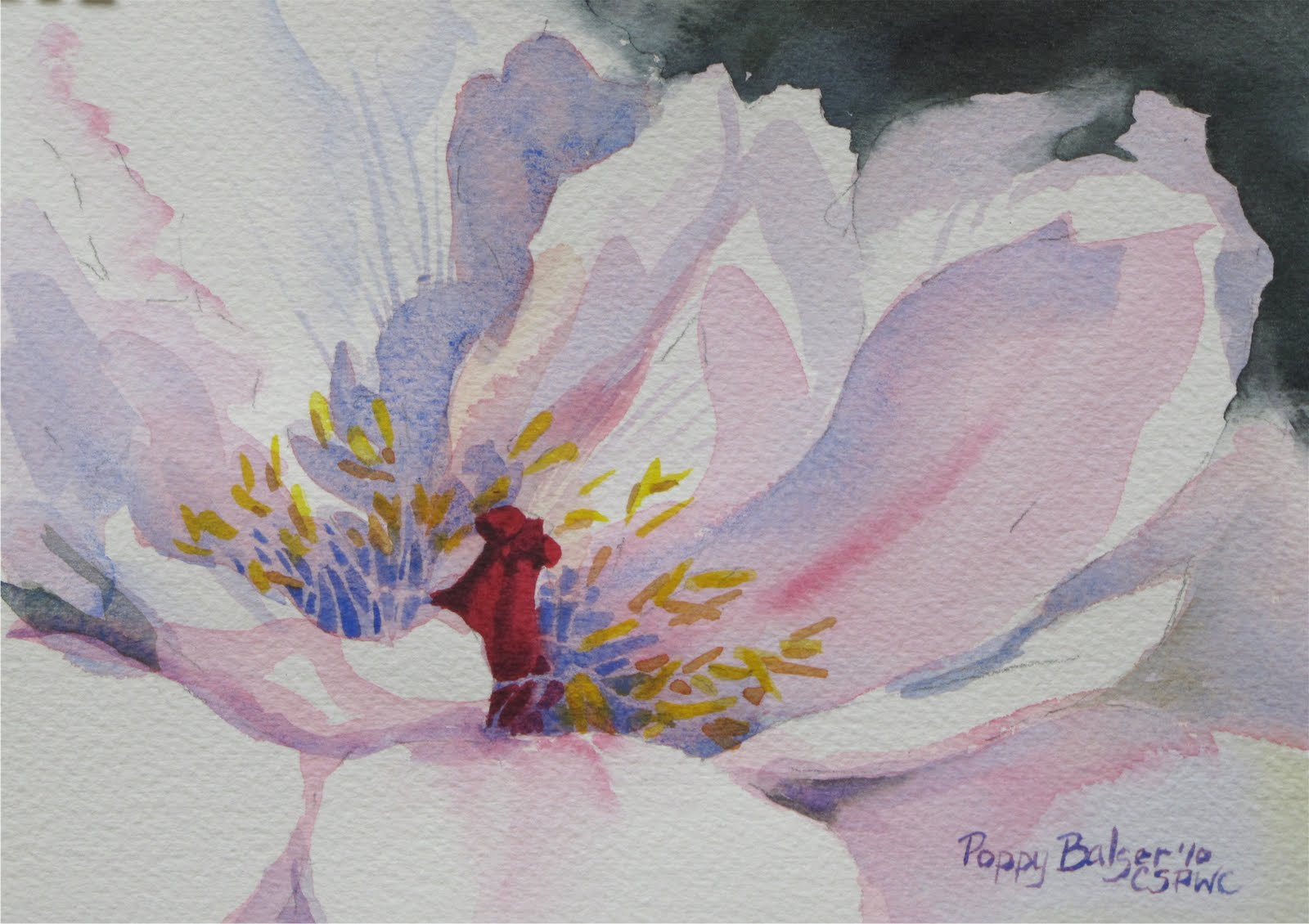 Paintings by poppy flower season tree peony sketch 5 x 7 watercolour dhlflorist Images