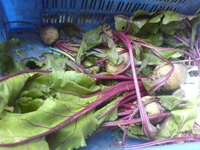 This Week at the Farmer's Market - Beet roots