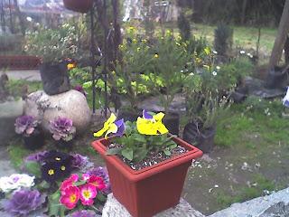 Jard n huerto las rosas plantas de sol directo - Plantas de sol directo para jardin ...