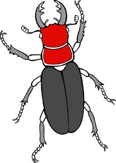 Escarabajo Funny