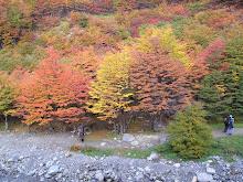 """""""Exquisitos colores de otoño"""""""