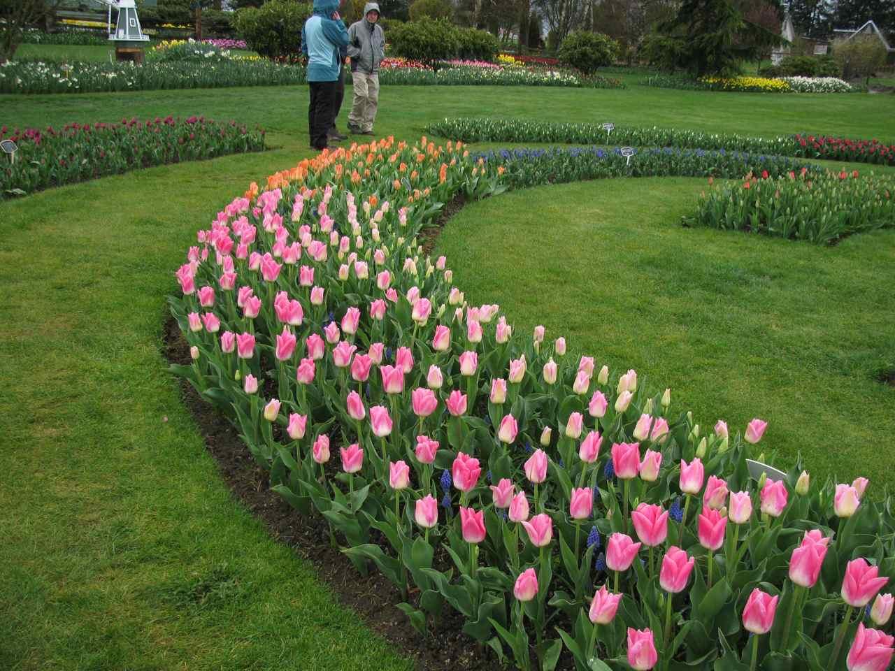 http://4.bp.blogspot.com/_O93HfUiFzt4/S60XWuEO1UI/AAAAAAAAByA/bQw-Sf1eD5U/s1600/tulips_2.jpg