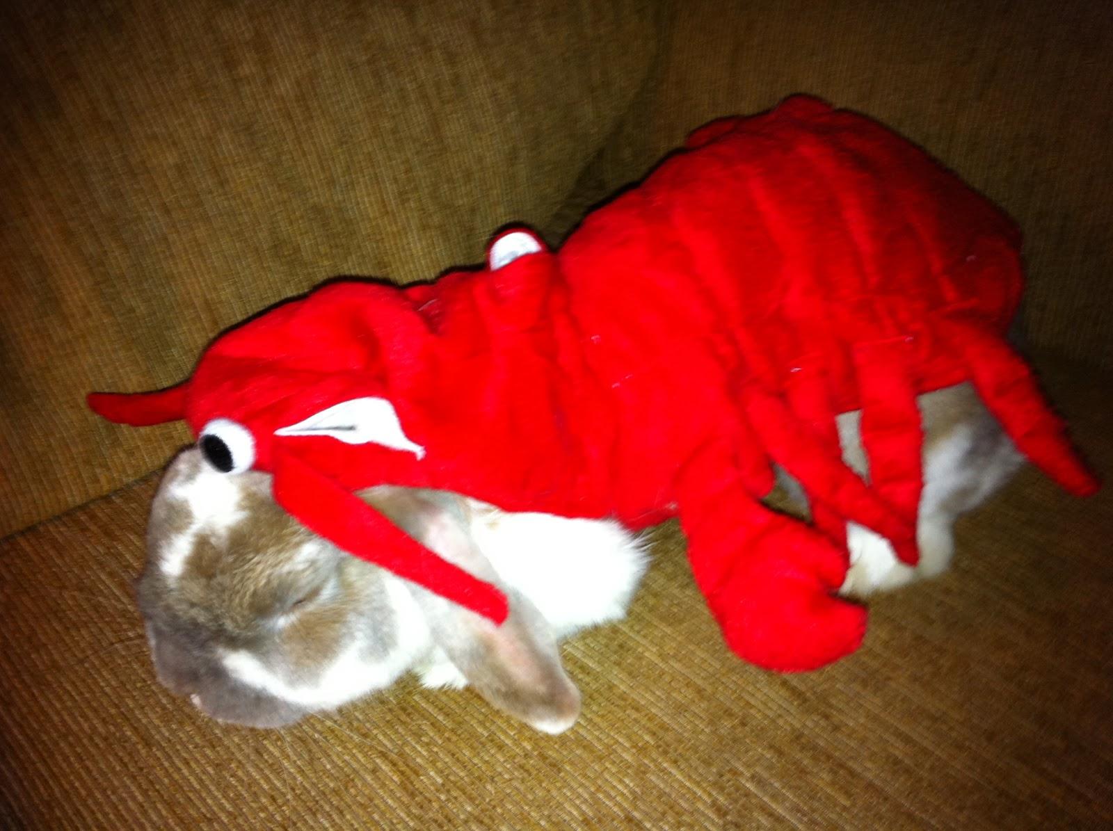 im a stupid lobster