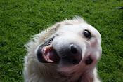 ... og fine hunden vår