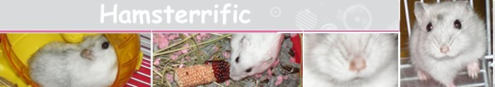 A Hamsterrific Blog