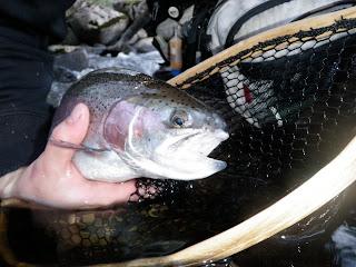 Flugfiske Tillbaka i Baltak