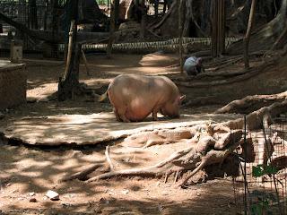porky piggy