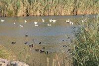 Το blog της Λίμνης Κουμουνδούρου