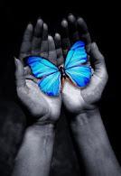 ¿Cómo nació el Proyecto Mariposa?