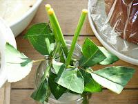 正月飾りのバラの挿し穂