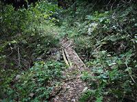 腐りかけの木製橋