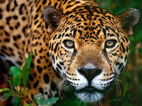 De la selva, sus animales