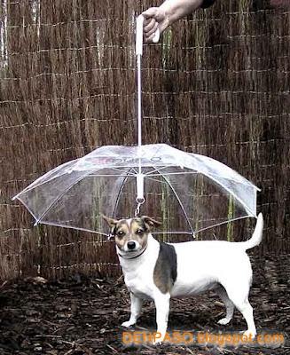 Фото зонтов