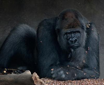 Прикольная фотография думающей обезьяны