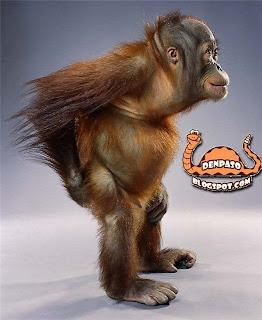 видео обезьяны