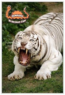 Шуточное поздравление с новым 2010 годом тигра