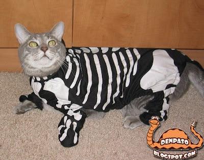 новогодние костюмы - скелет