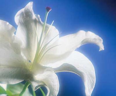 funeral flowerstimes deepest heart felt karen