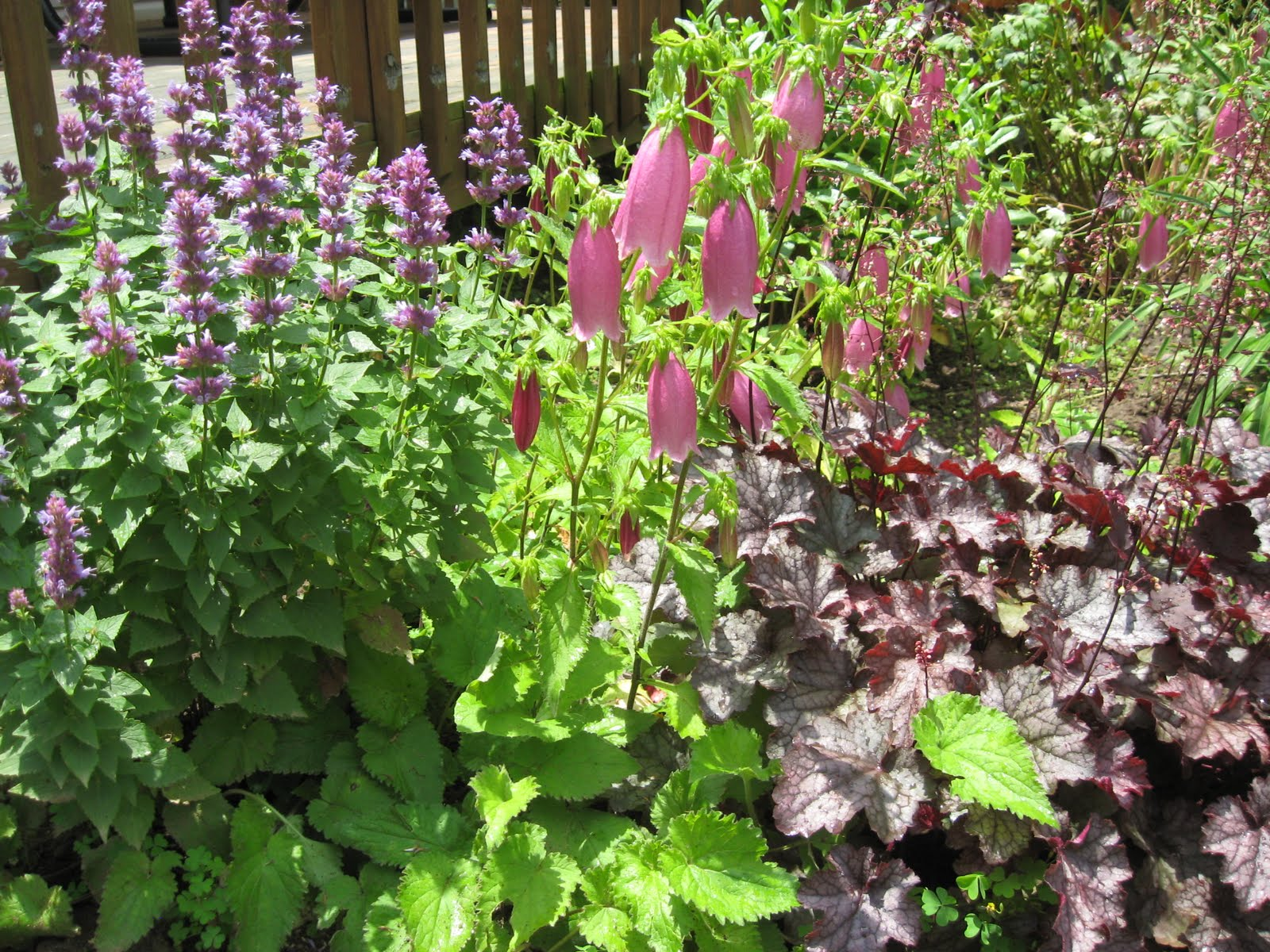 Home joys frugal gardening tip 4 plant perennials for Plants for outdoor garden