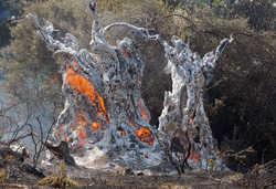 Φωτιές, καμμένα παντού