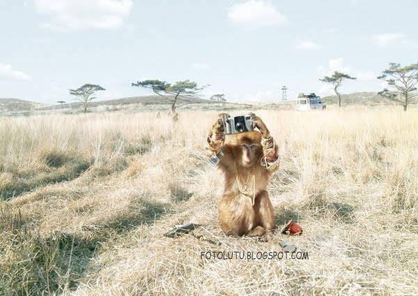 Difoto Sama Monyet, Ayo Bilang Keju