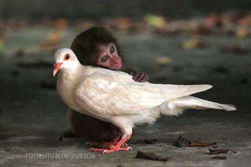 Cinta Oh Cinta, Bukan Hanya Milik Manusia
