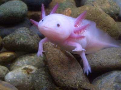 Misteri Ikan Aneh Berkaki