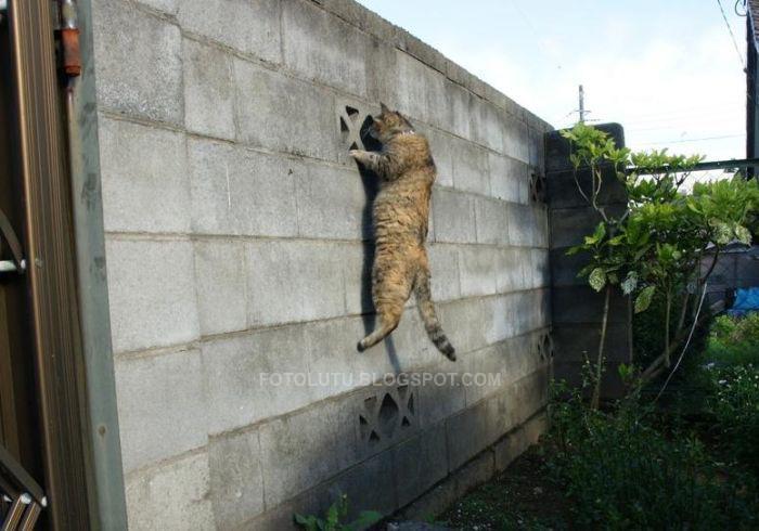 Kucing Hobinya Ngintip