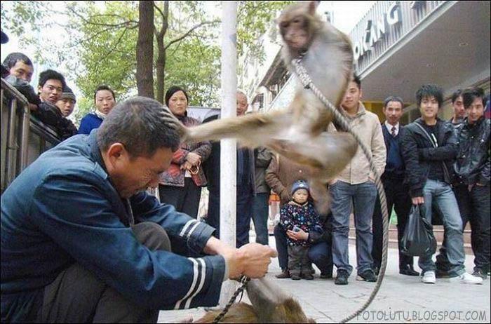 Monyet Balas Dendam