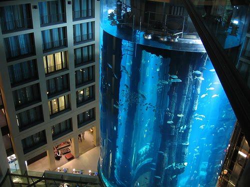 Salah Satu Akuarium Terbesar Di Dunia