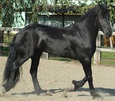 Cavallo frisone