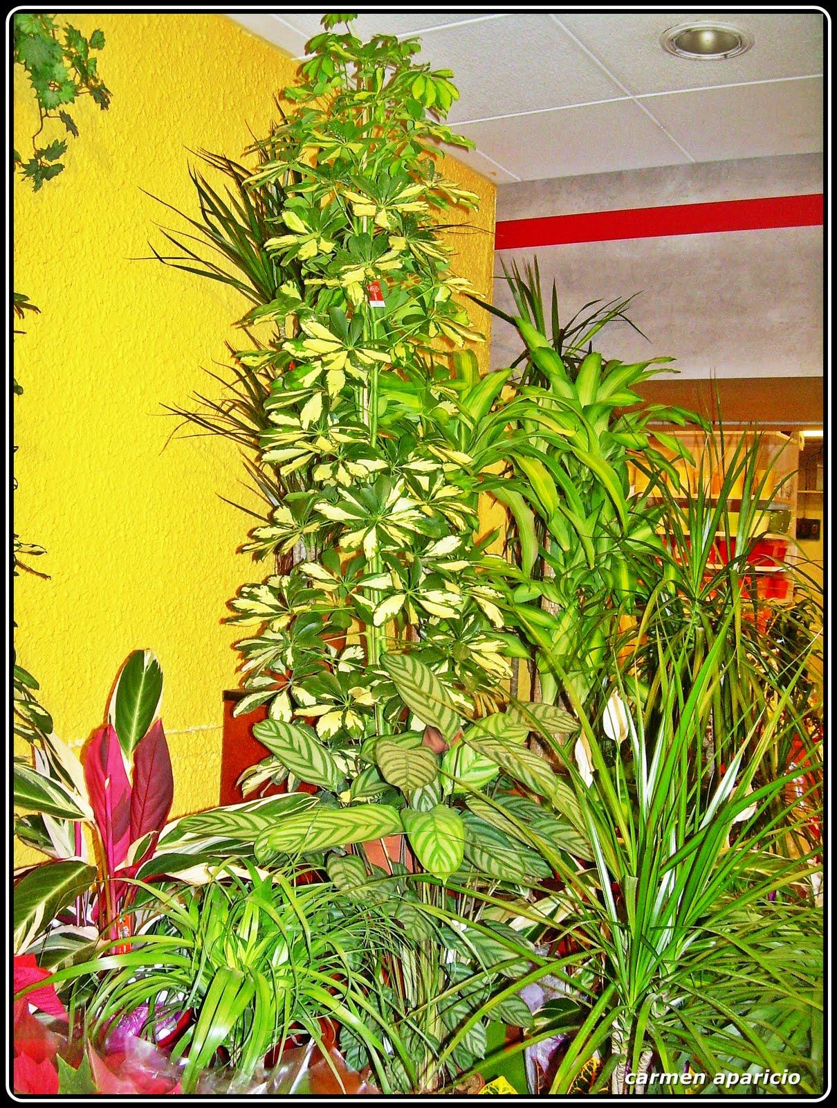 El jardin de carmen regala flores por navidad for 6 plantas ornamentales