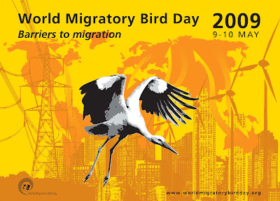 migratory waterfowl of nw