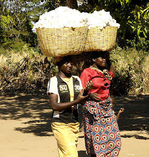 Julie Larsen Maher/Wildlife Conservation Society  Organic cotton farmers in Zambia.